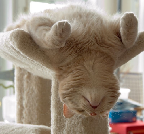 Cute kitty upside down