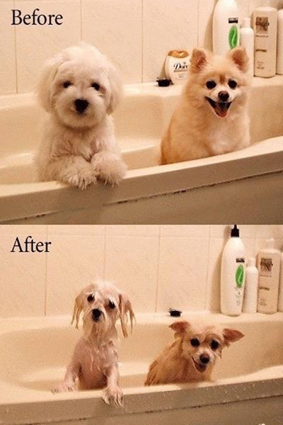 Why dogs hate bath (funny)