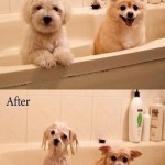 Why dogs hate bath