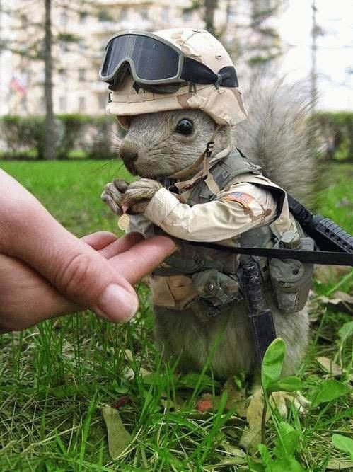 US Army special forces (rat)