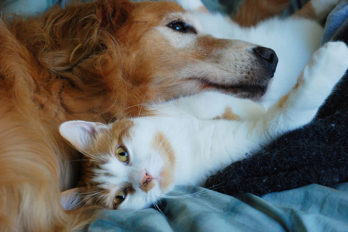 Best friends - cat and dog sleeping