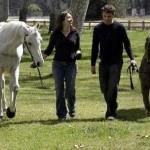 Horse vs dog