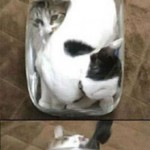 Cats in a jar