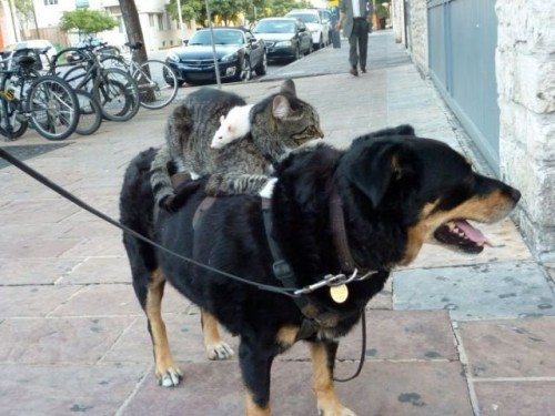 Dog + cat + mouse = friends