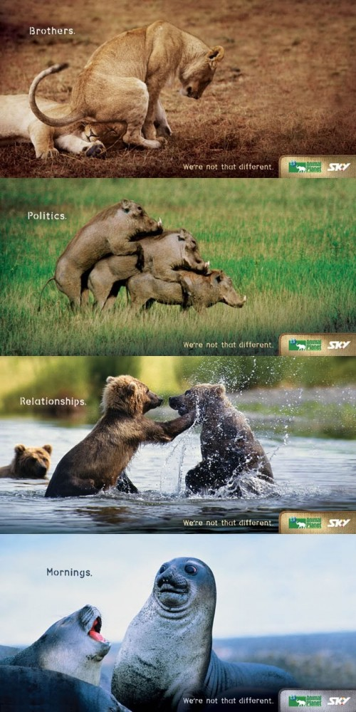 Animal Planet ads rule