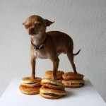 Chihuahua Burger King