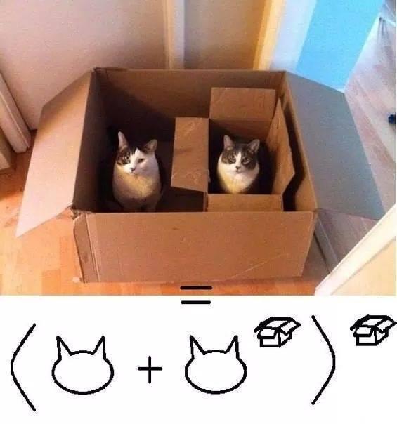Cat math