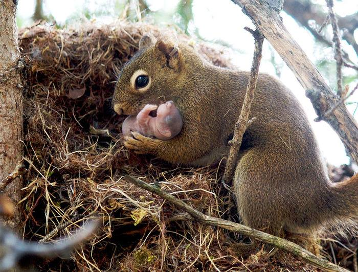 Mother squirrel baby