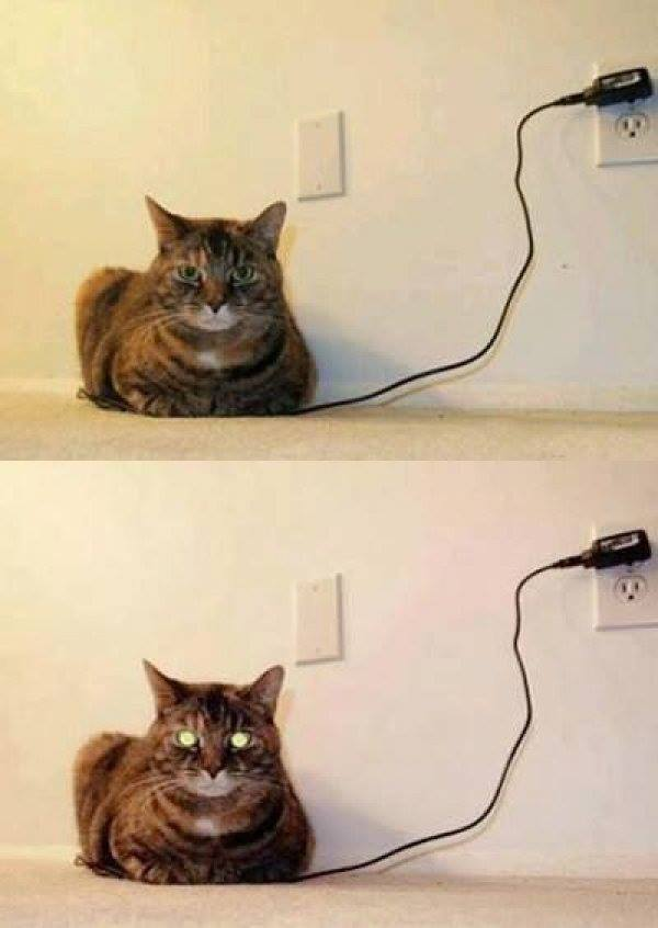 Cat fully charged