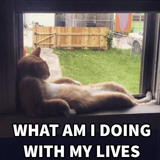 cat introspection