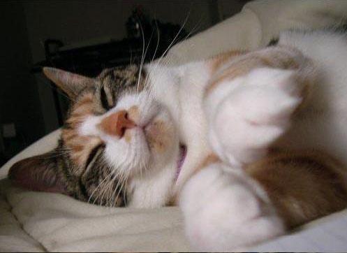 Cute sleeping kitty paws