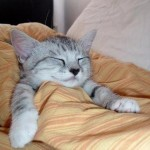 Cutest Sleeping Kitties