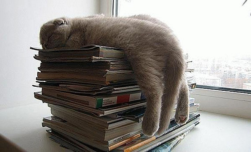 Kitty sleeping on papers