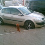 How to park your dog