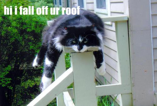hump cat