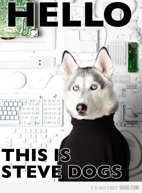 Steve Dogs