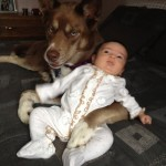 Doggy babysitter