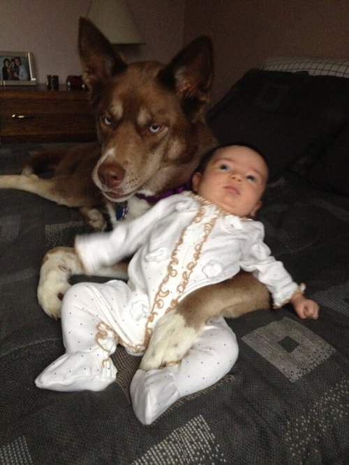 doggy-babysitter