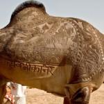 Camel haircut