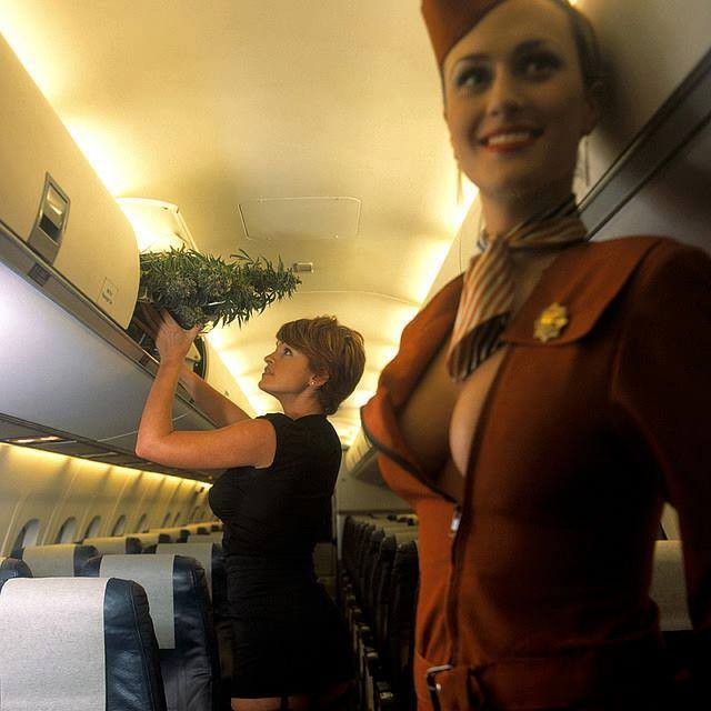 stewardess outfit boobs