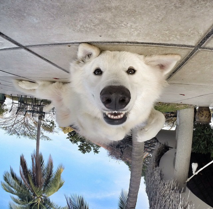 upside down dog
