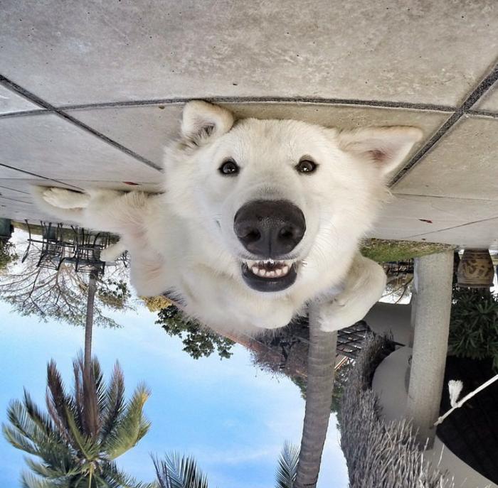 upside down dog