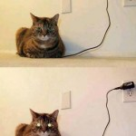 How to know when the cat is fully charged