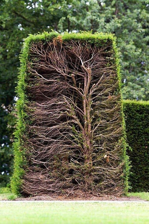 Hedge cross section