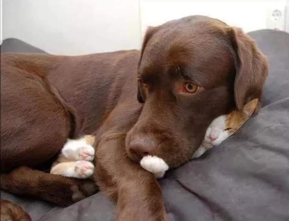 cat sits on dog
